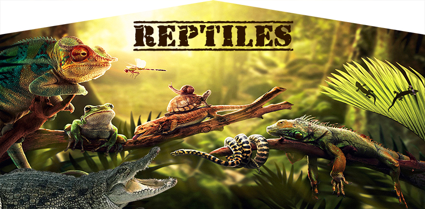 Reptile Jumper